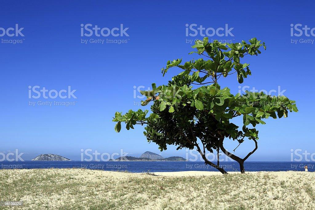 ipanema tree royalty-free stock photo