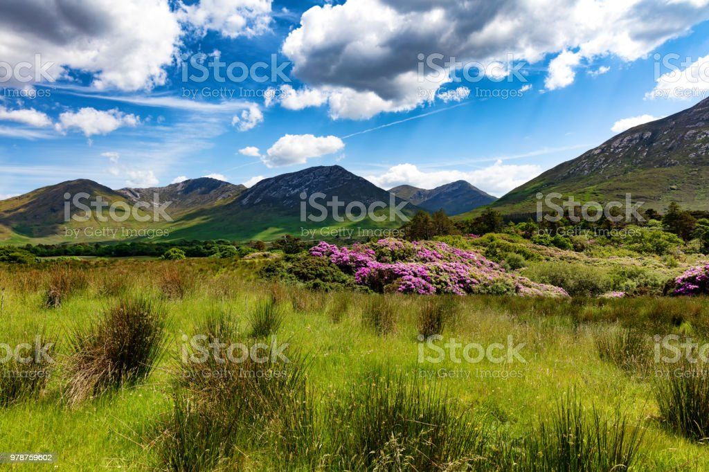 Tall green grasses and hills in Ireland Europe