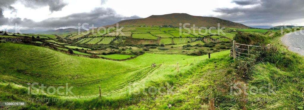 Lush green landscape of the Irish countryside