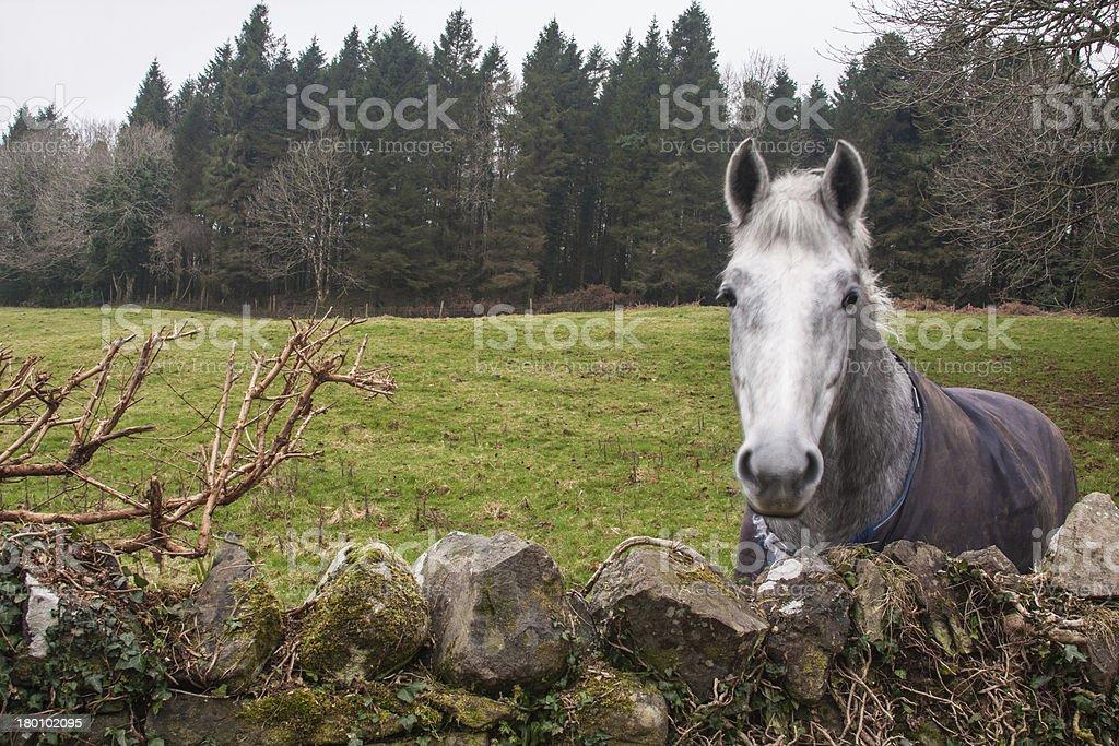 Ireland stock photo