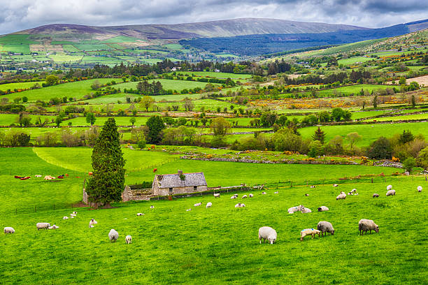 Ireland stock photo