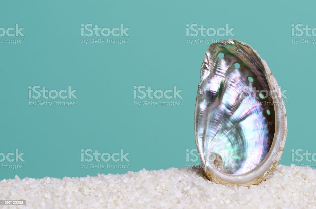 청록색 바탕에 흰 모래에 무지개 빛깔의 전복 포탄 스톡 사진