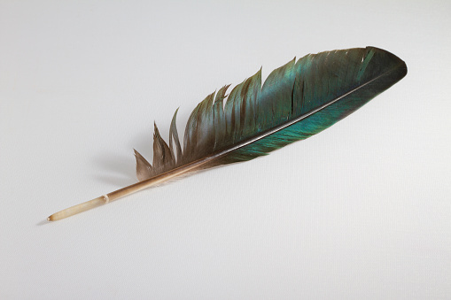 Iridescent green feather on white background