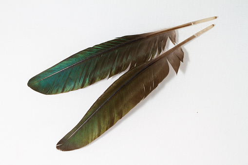 Iridescent green feathers on white background