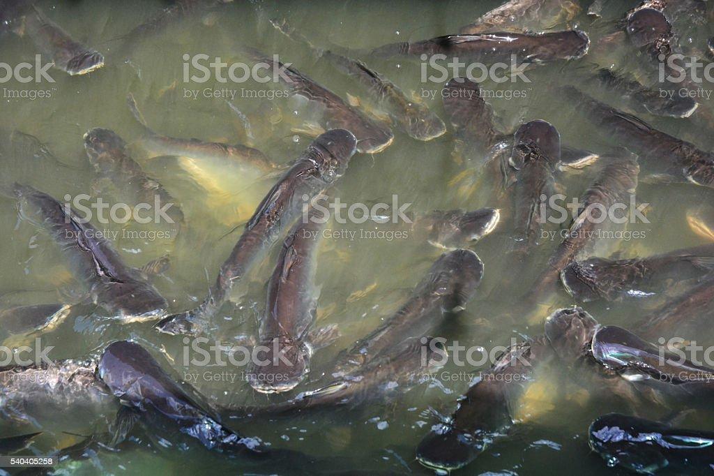 Iridescent shark stock photo