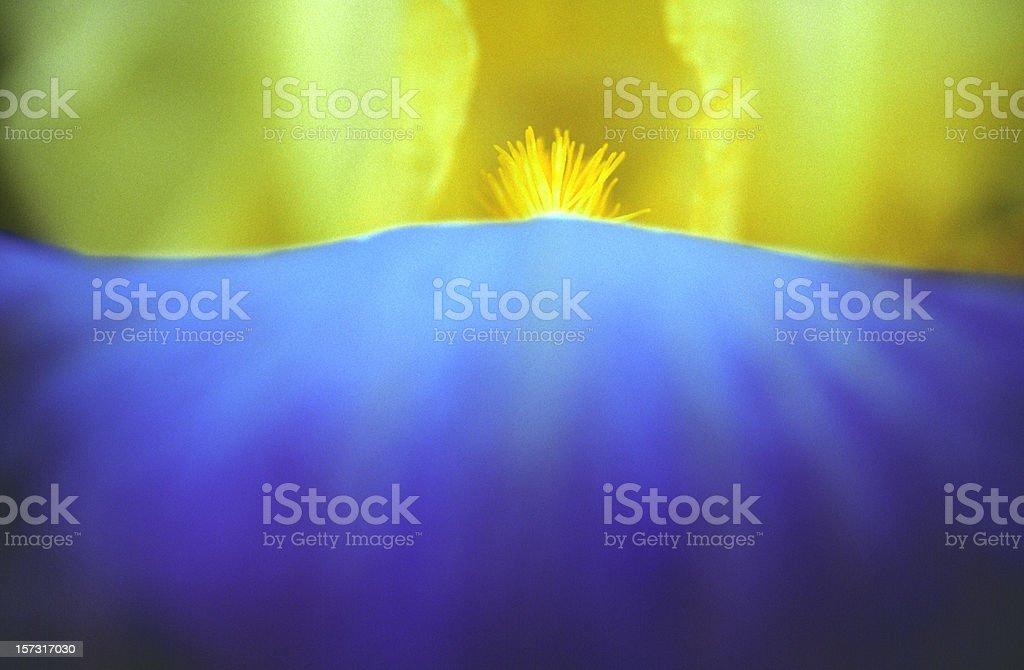 Iris Flower, Macro, Yellow, Blue, Abstract, Spring royalty-free stock photo
