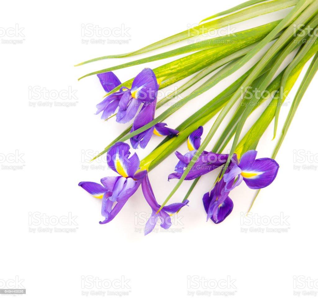 Iris flowers isolated on white stock photo more pictures of iris flowers isolated on white royalty free stock photo izmirmasajfo