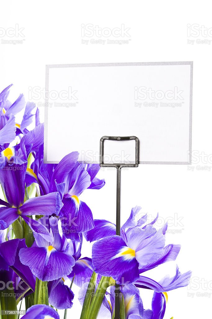 Iris isolated on white royalty-free stock photo