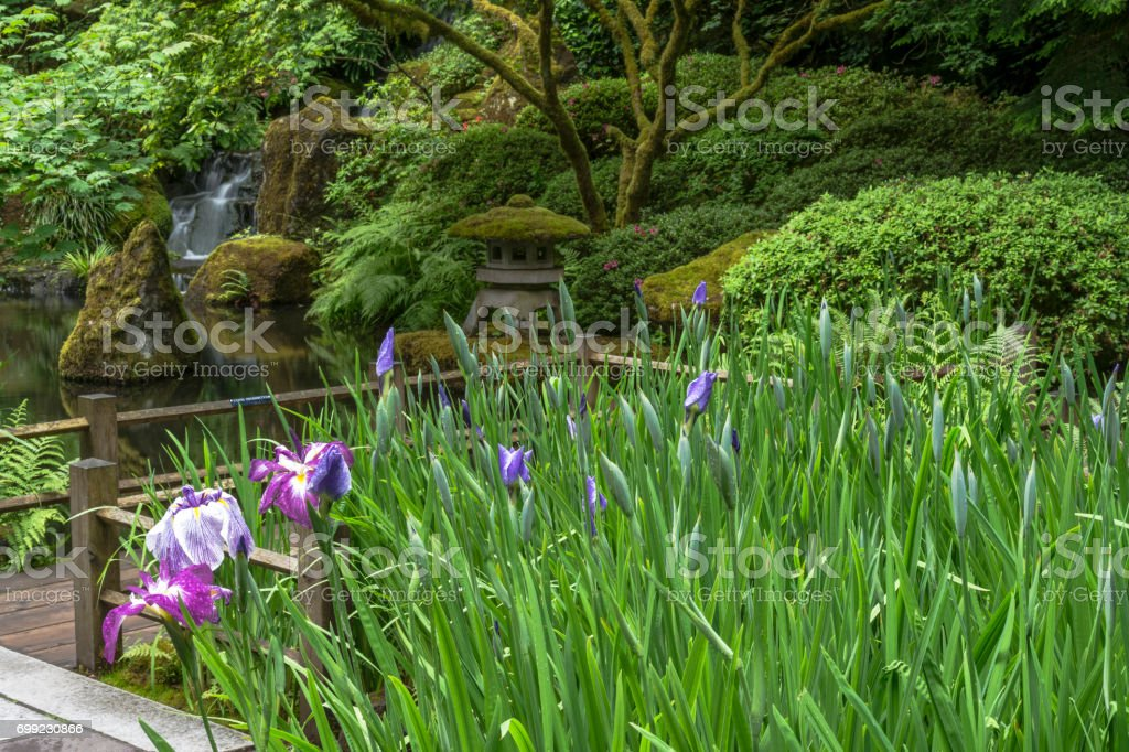 Iris Pond Path Stone Lantern Portland Japanese Garden Portland ...