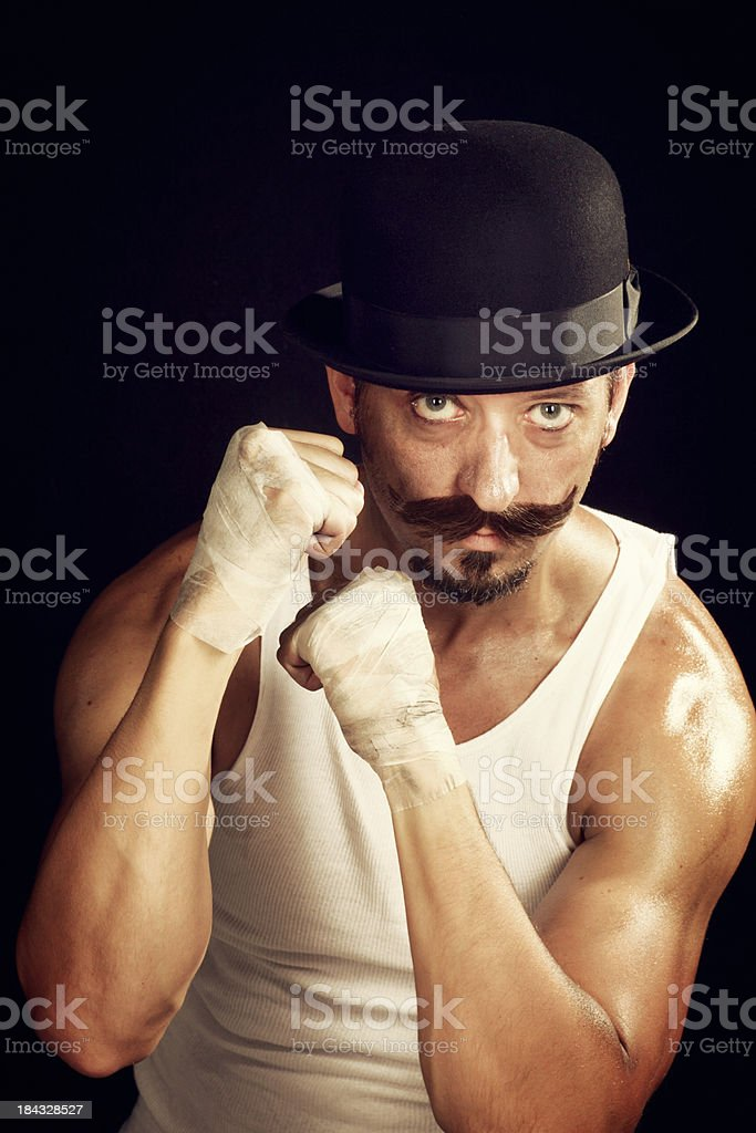 Irish Boxer stock photo