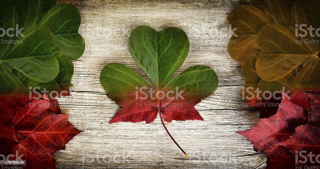 Irish Canadian Flag Art Concept stock photo