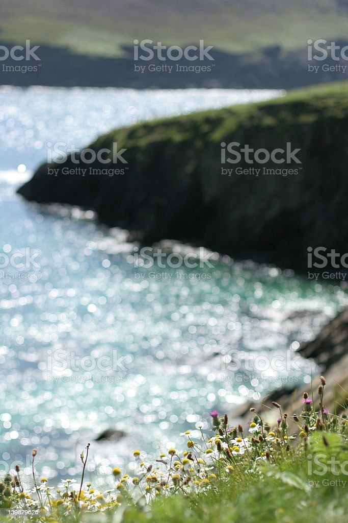Irish Coastal Flowers stock photo