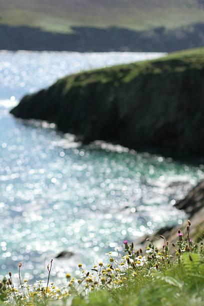 Irish Coastal Flowers stock photo