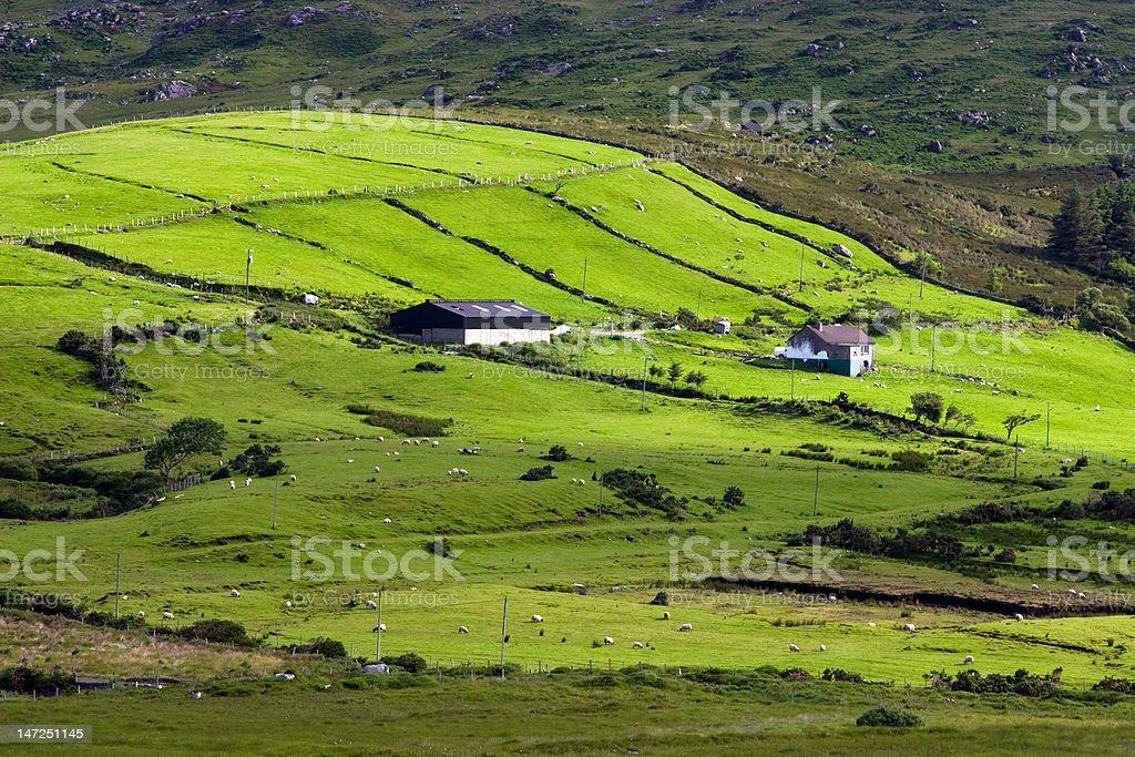Irish farm royalty-free stock photo