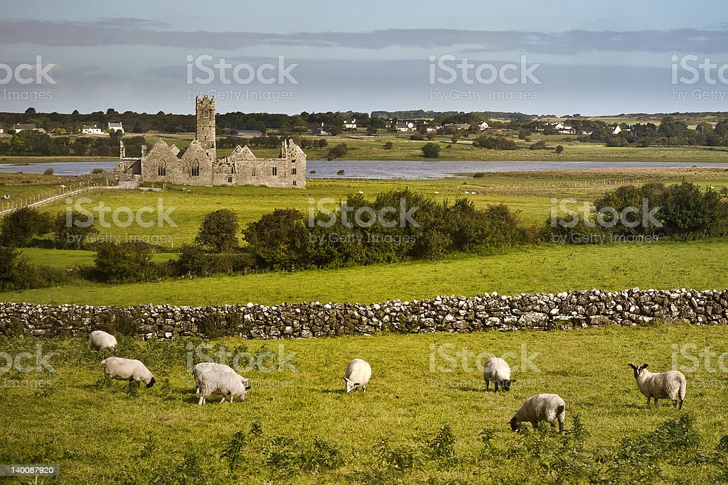Irish Panorama with sheeps stock photo