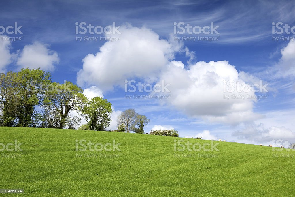 Irish spring in meadow royalty-free stock photo