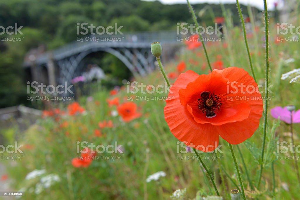 Ironbridge Poppy stock photo