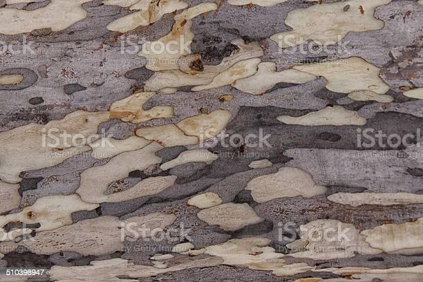 Photo of ironwood background