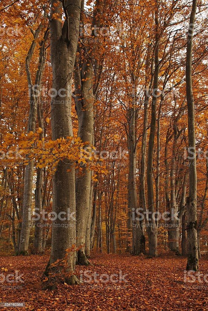 Ironwood forest stock photo