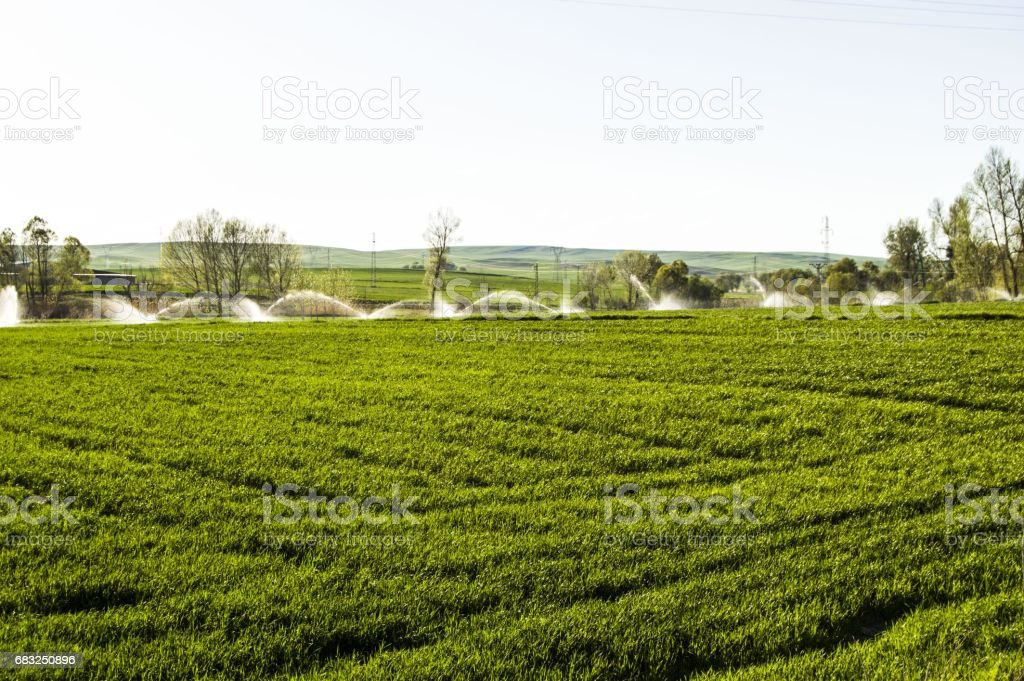 Irrigated agriculture, irrigated agricultural land, pictures of irrigated wheat fields foto de stock royalty-free