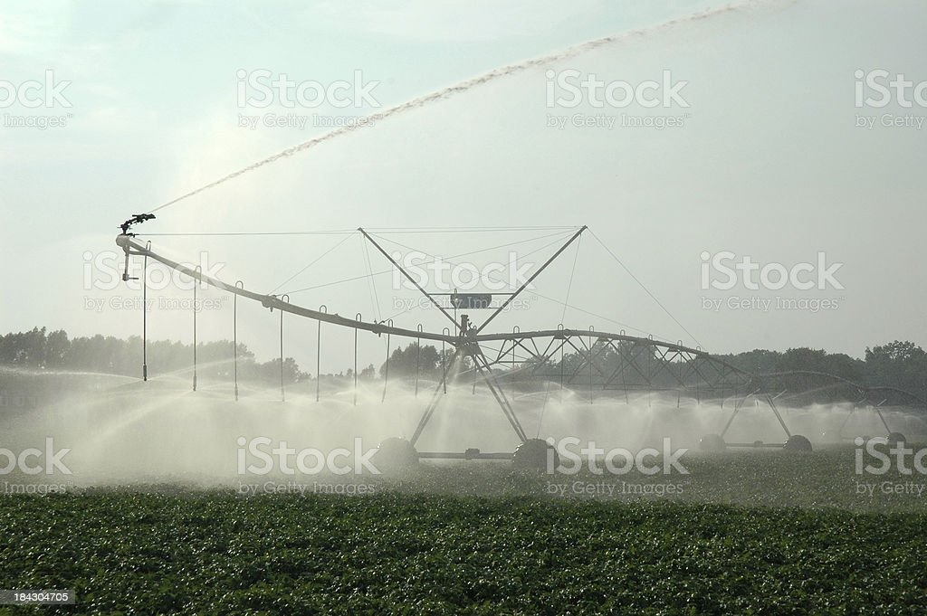 Irrigating Crops stock photo