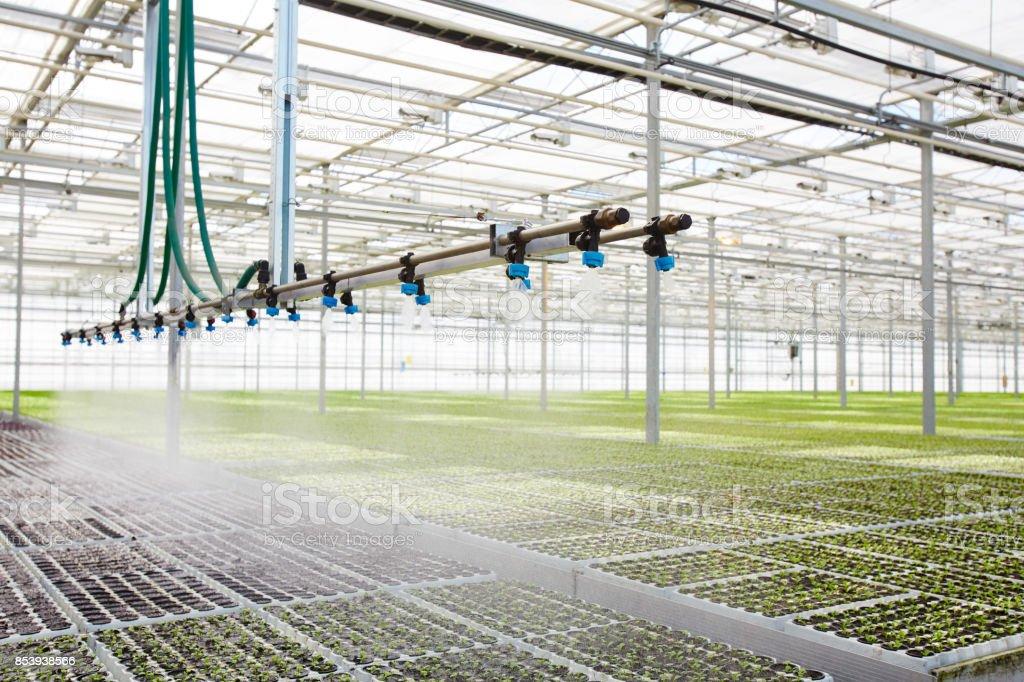 Irrigating seedlings стоковое фото