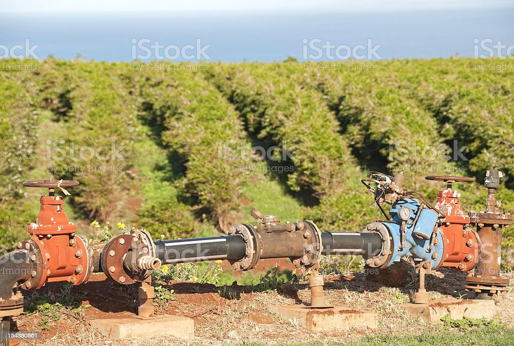 Irrigation and coffee plants on island of Maui royalty-free stock photo