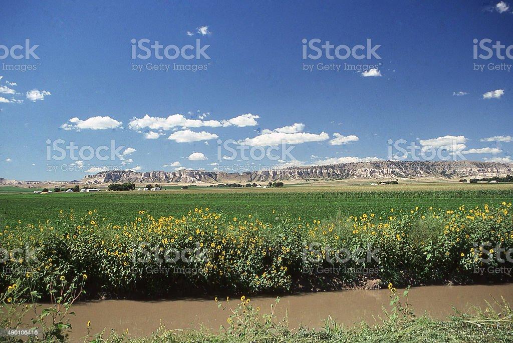 Irrigation canal and sunflower weeds near Chimney Rock Nebraska stock photo
