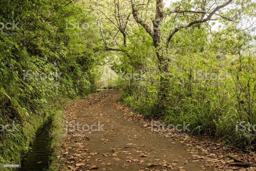 관개 운하 levadas입니다. 마데이라 섬에 산에서 열 대 숲 - 로열티 프리 0명 스톡 사진