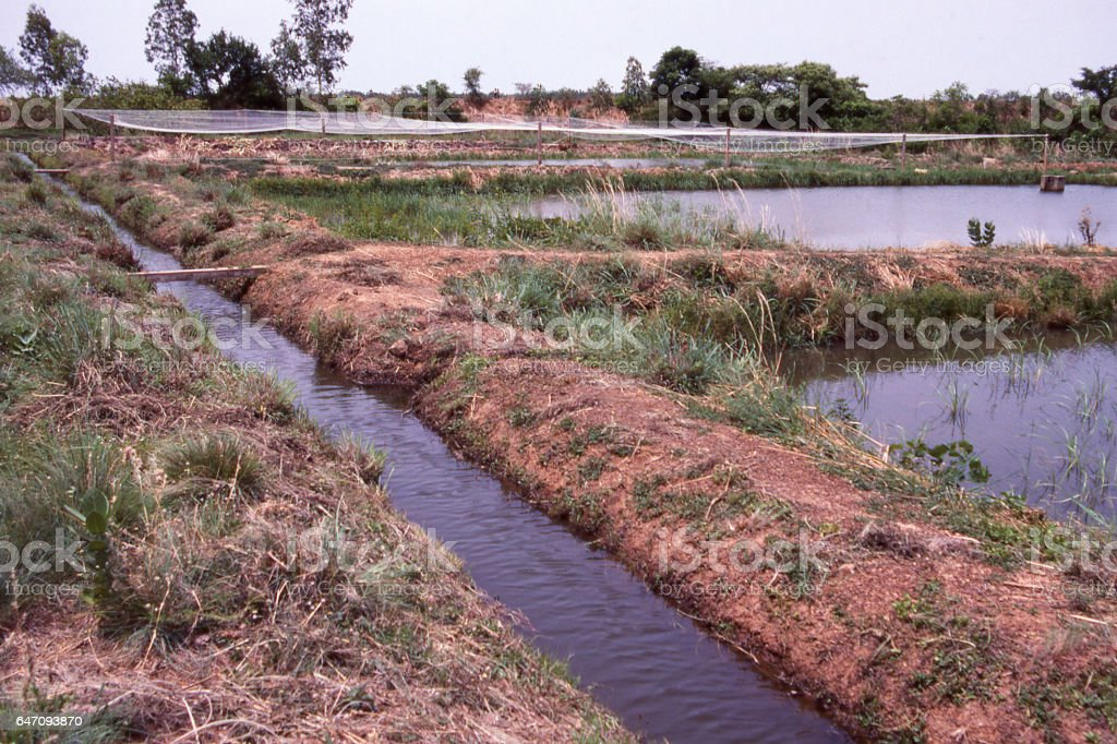 Irrigation ditch and aquaculture ponds near the Volta River southern Burkina Faso Africa stock photo