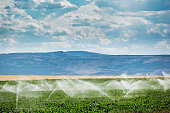 Irrigation equipment watering a farm field. Agricultural water sprinkler technology spraying plant crops in a rural landscape of Idaho, USA