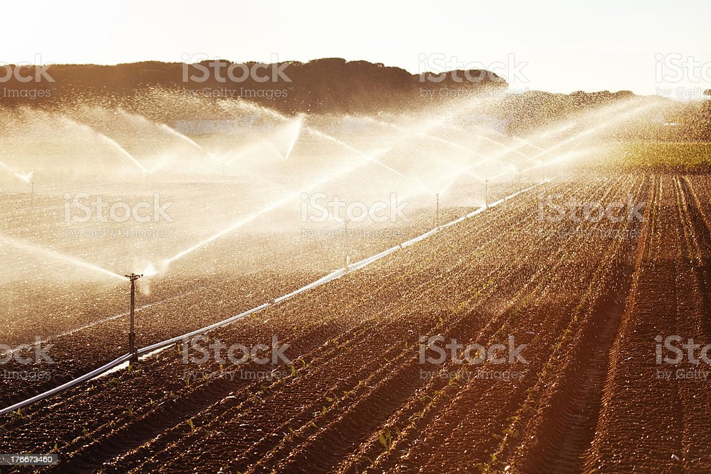 Irrigation in Corn Field royalty-free stock photo
