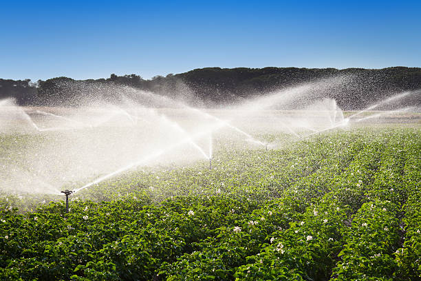 irrigation in field of growing potatoes - watering stock pictures, royalty-free photos & images