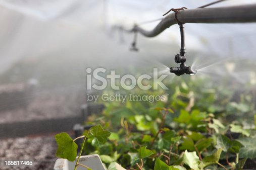 Irrigation in the greenhouse. Mist spray in action to irrigate by fog a greenhouse.