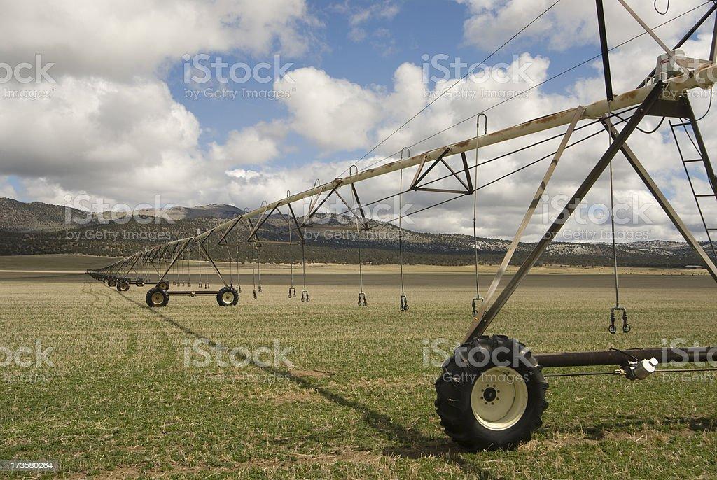 Irrigation line stock photo
