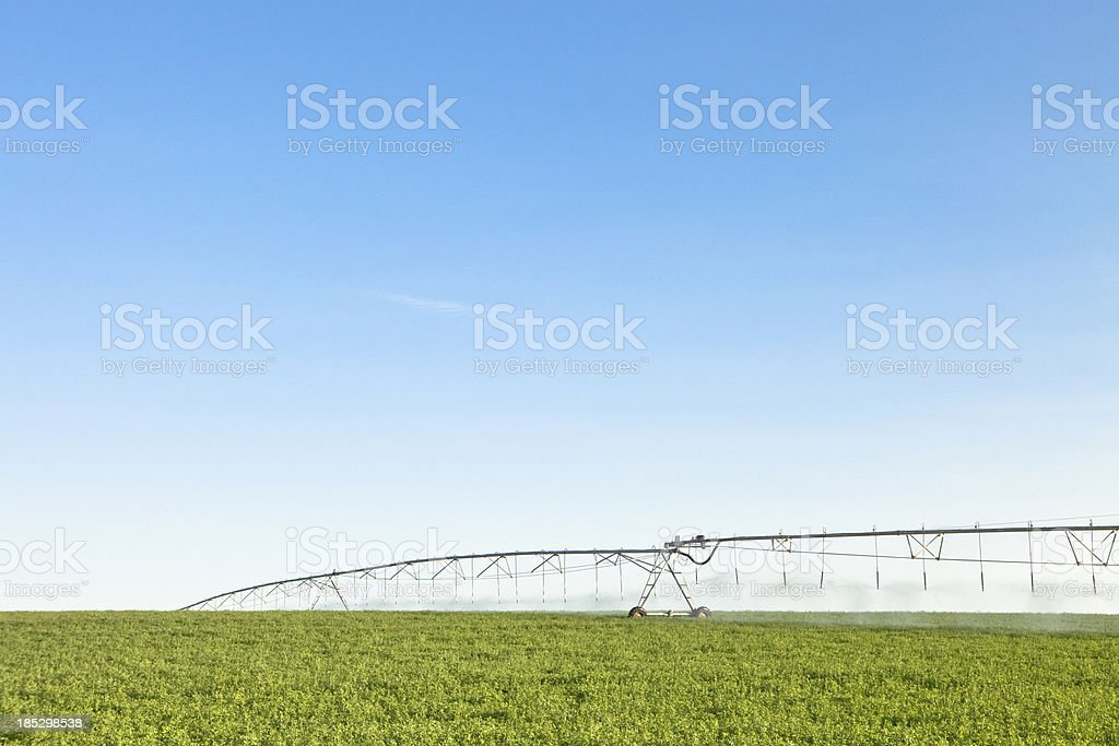Irrigation Line Watering Crop stock photo