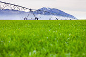 Irrigation machine watering green grass with mountains in the background
