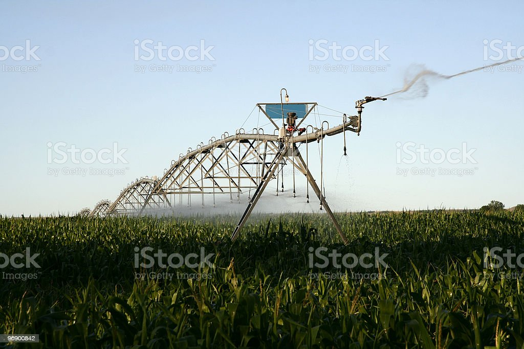 Irrigation of Corn royalty-free stock photo