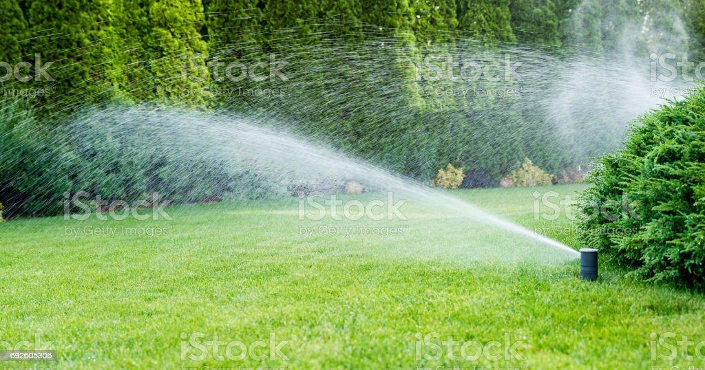Irrigation du gazon vert avec système d'arrosage. - Photo