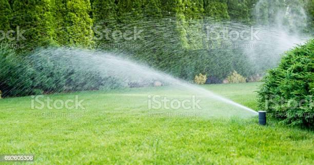 Bewässerung Des Grünen Grases Mit Sprinkleranlage Stockfoto und mehr Bilder von Ausrüstung und Geräte
