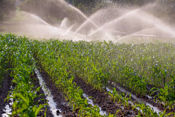 Irrigation on a maize crop Irrigation on a young maize crop in South Africa irrigation equipment stock pictures, royalty-free photos & images