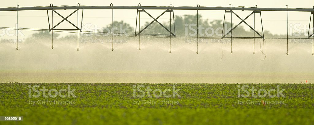 Irrigation on field royalty-free stock photo