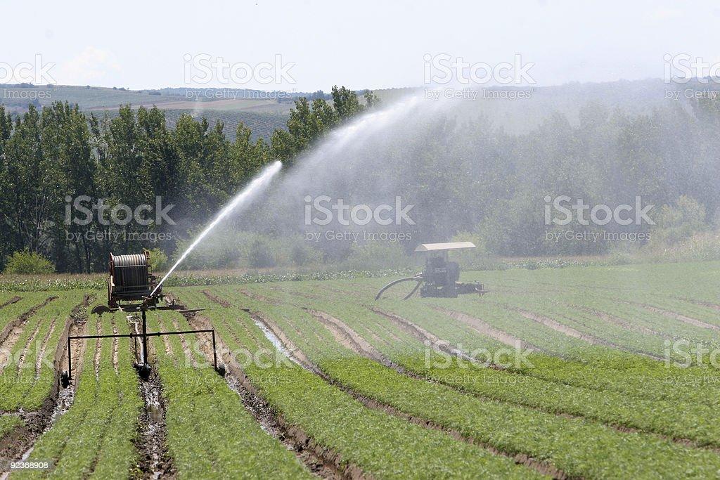 Irrigation royalty-free stock photo