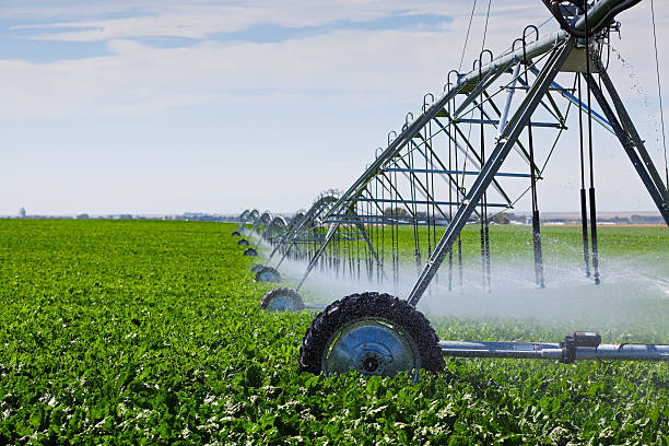 Irrigation Pivot An irrigation pivot watering a field of turnips. irrigation equipment stock pictures, royalty-free photos & images