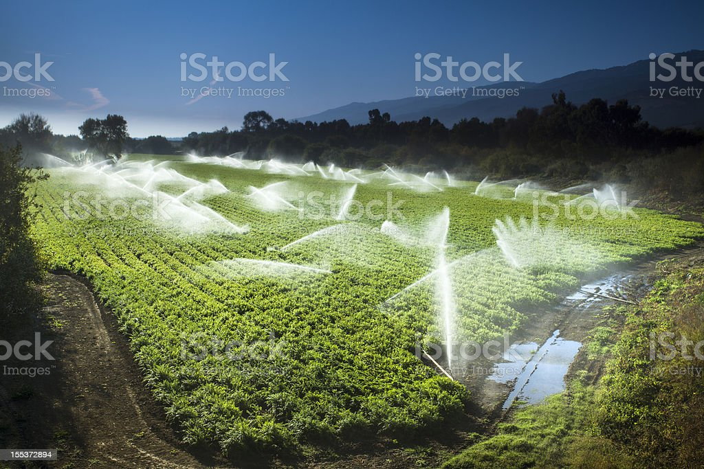 Irrigation sprinkler watering crops on fertile farm land royalty-free stock photo