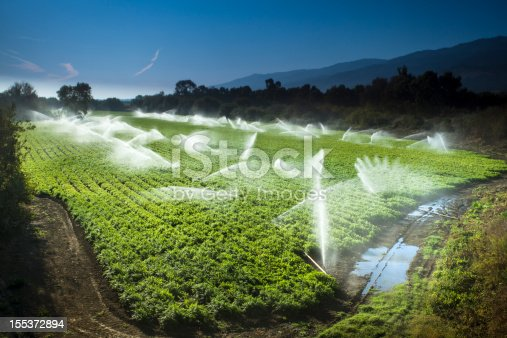 A green row celery field is watered and sprayed by irrigation equipment in the Salinas Valley, California USA