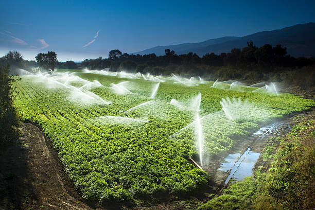 Irrigation sprinkler watering crops on fertile farm land A green row celery field is watered and sprayed by irrigation equipment in the Salinas Valley, California USA irrigation equipment stock pictures, royalty-free photos & images