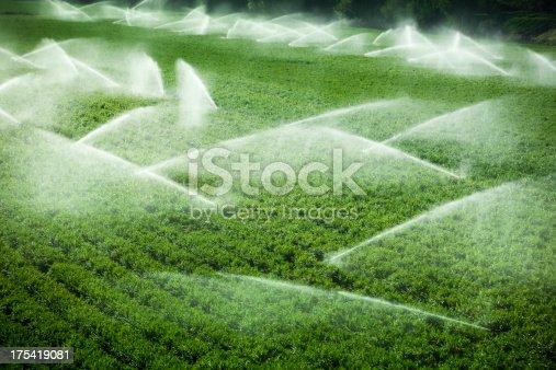 istock Irrigation sprinkler watering crops on fertile farm land 175419081