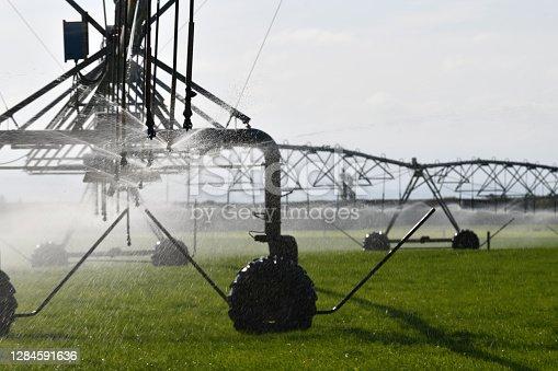 Irrigation sprinklers water dairy pasture in Canterbury, New Zealand