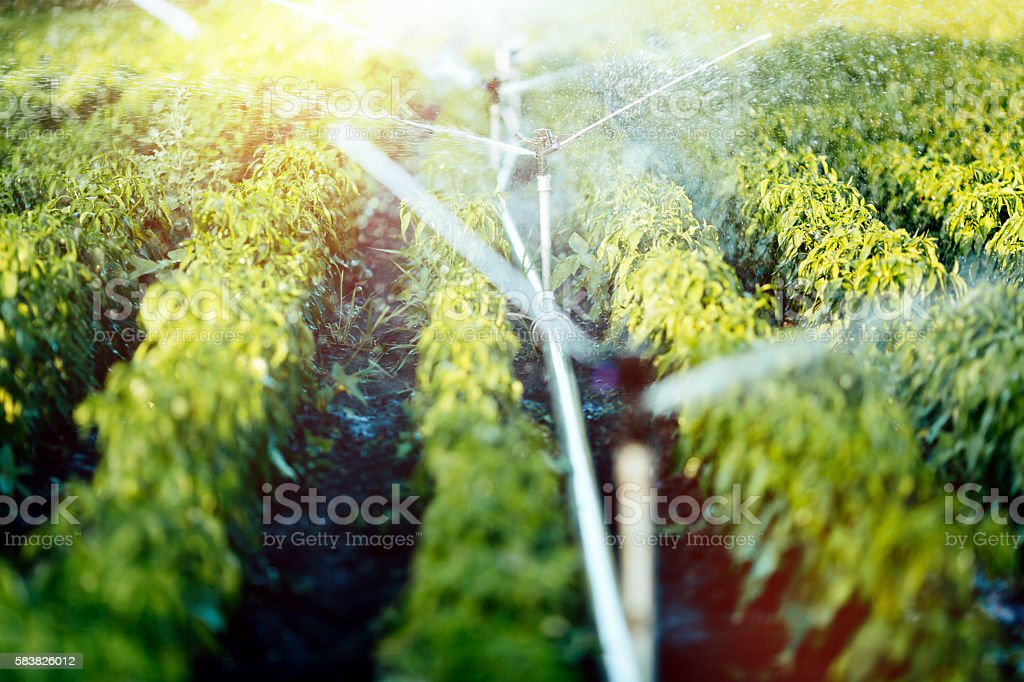 Irrigation system in function stock photo
